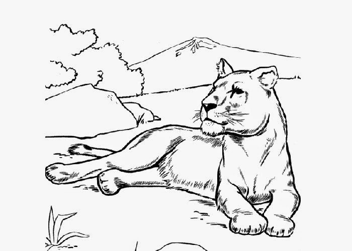 700x500 Lioness Coloring Page Free Coloring Pages And Coloring Books