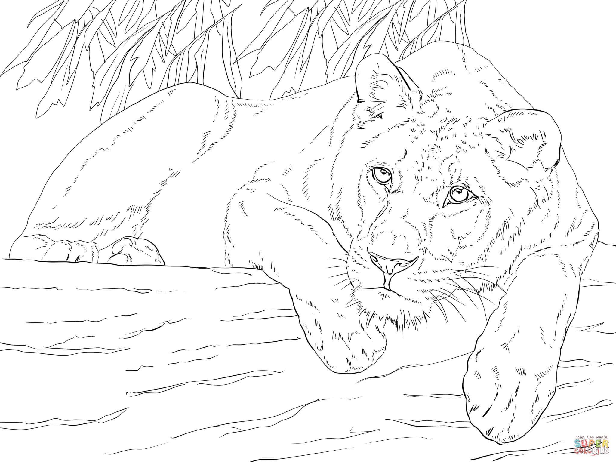 2048x1536 Lioness Coloring Pages Download And Print For Free