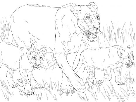 465x348 Lioness With Cubs Animal Colouring Pages Printable