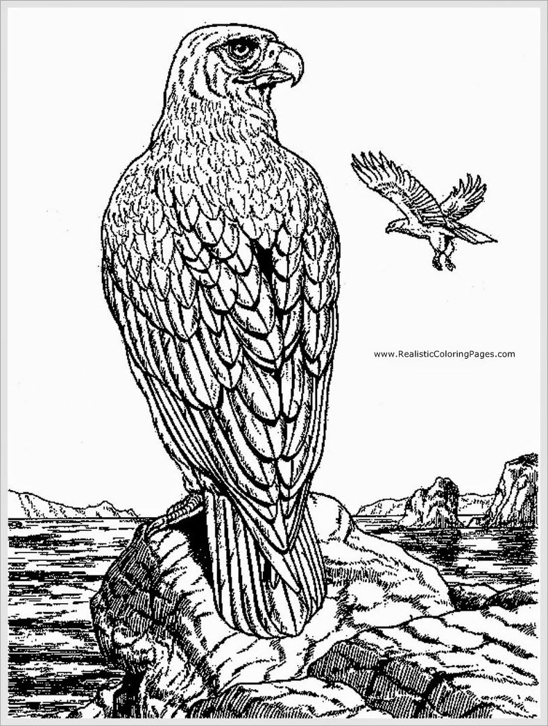 790x1046 Eagle Adult Coloring Pages Coloring Pages For Adults New
