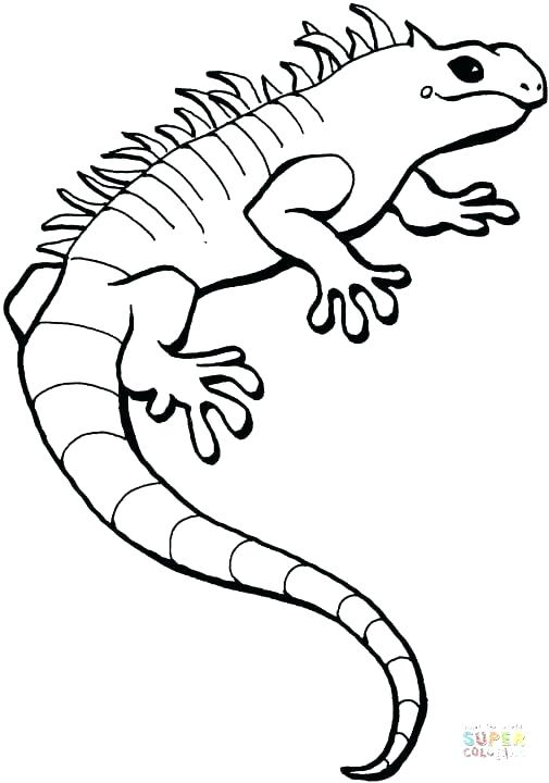505x720 Lizards Coloring Pages Iguana Coloring Pages Click The Iguana