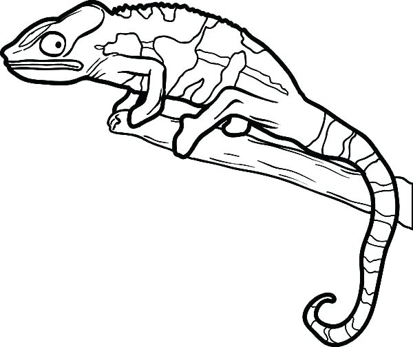 600x504 Reptile Coloring Pages Reptile Coloring Pages As Well As Free
