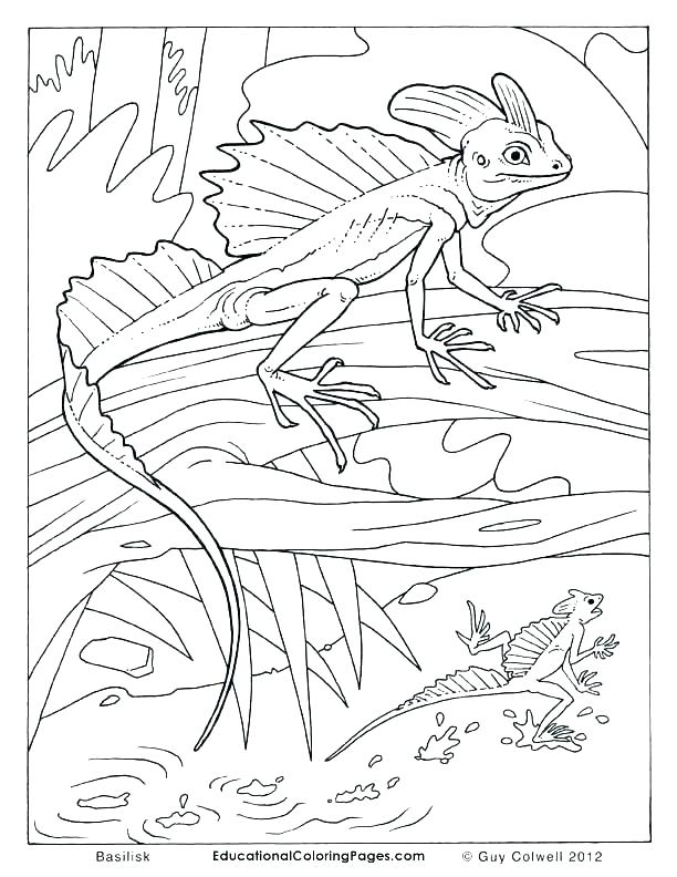 612x792 Reptile Coloring Pages Reptiles Coloring Pages Reptile Coloring