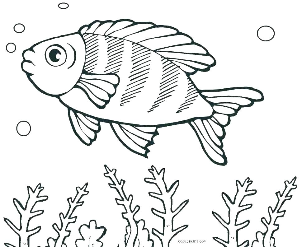 970x794 Betta Fish Coloring Pages