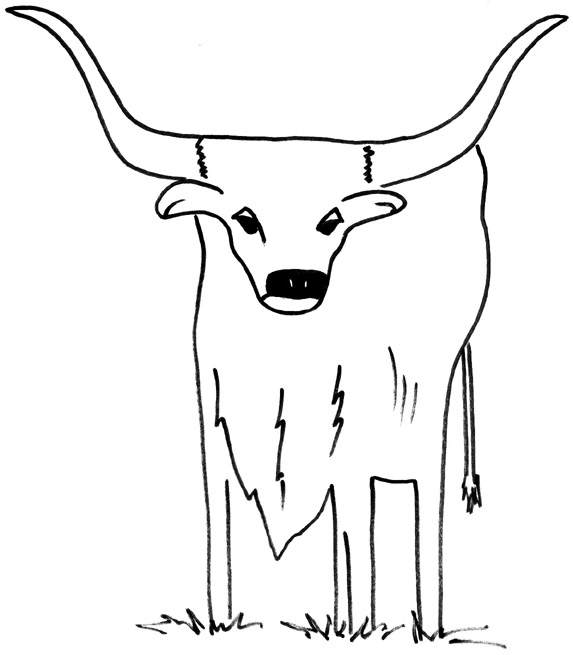 573x655 Images Of Texas Longhorn Cow Coloring Pages Printable