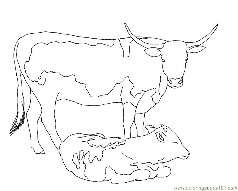 800x642 Longhorn Cow Calf Coloring Page