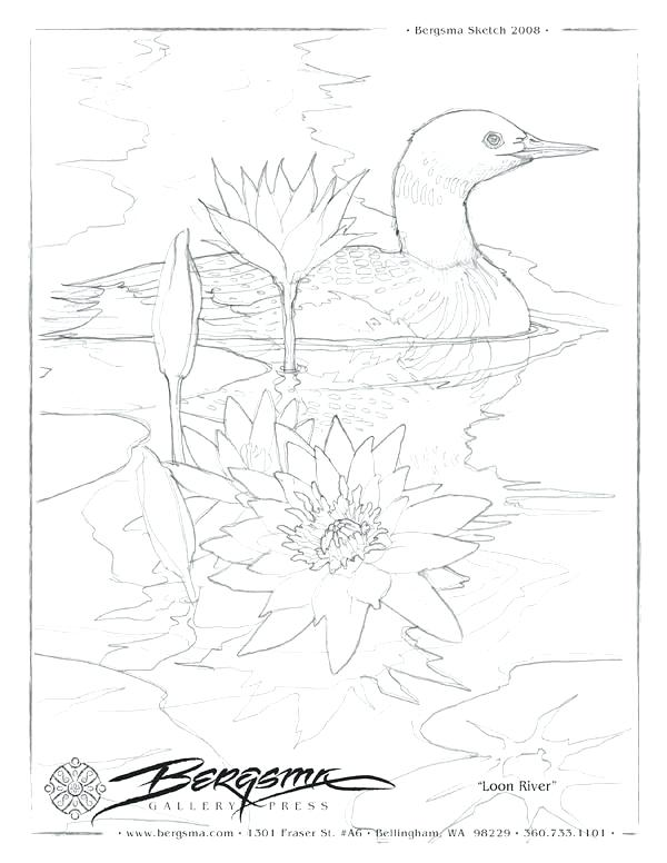 600x776 Loon Coloring Page A Lot Of Drawing Shits Some With Coloring