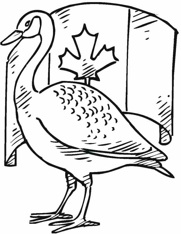 579x751 Loon Coloring Page Common Loon Loons Birds Coloring Pages Free