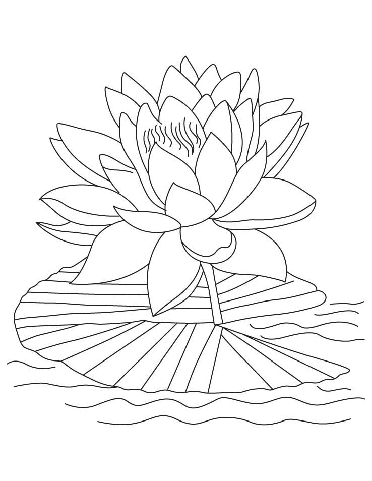 738x954 Free Printable Lotus Coloring Pages For Kids Lotus, Embroidery