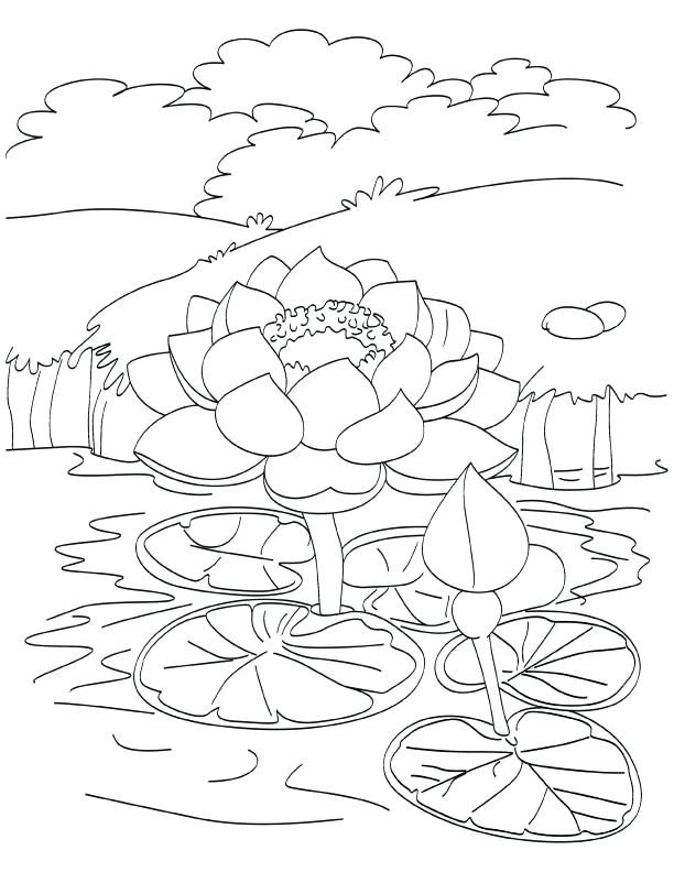 612x792 Lotus Coloring Pages Blooming Lotus In Pond Coloring Page Lotus