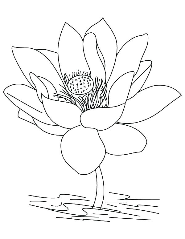 600x776 Lotus Coloring Pages Lotus Coloring Pages Printable Lotus Mandala