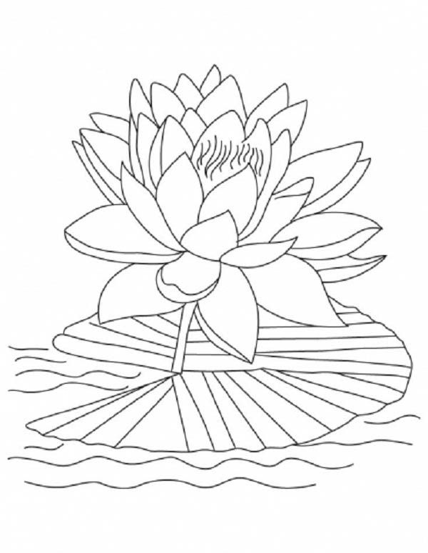600x774 Lotus Flower, Lotus Flower Reopen And Bloom Coloring Page