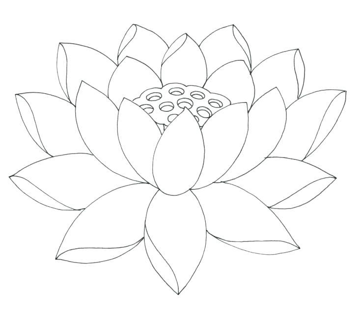 735x642 Coloring Pages Lotus Flower Coloring Page Mandala Lotus Coloring
