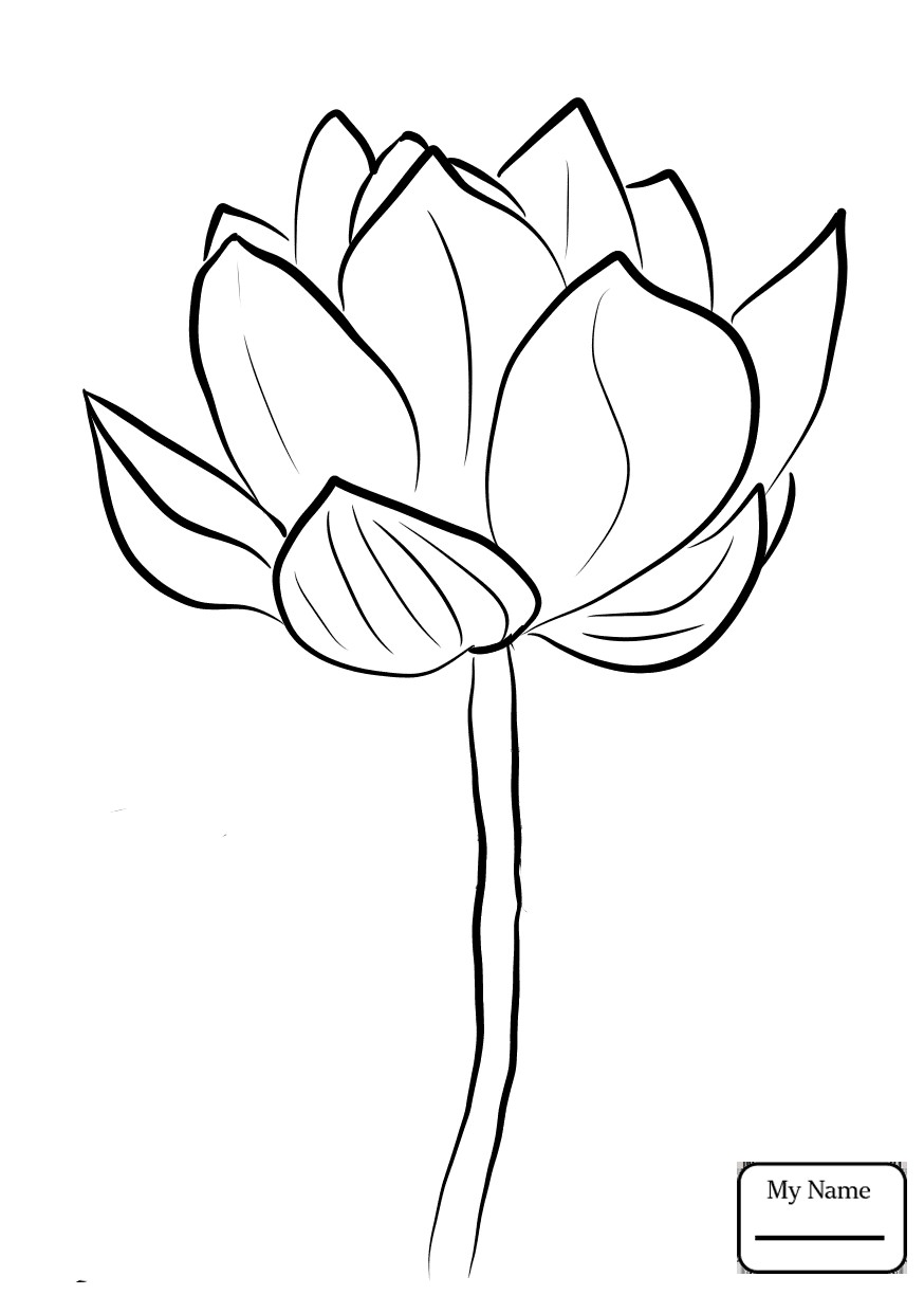 874x1224 Coloring Pages Of Lotus Flowers Fresh Lotus Flowers Lotus Blossom