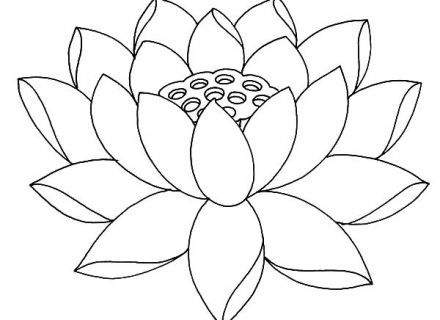 440x320 Lotus Flower Fully Bloom Lotus Flower Coloring Pages Fully