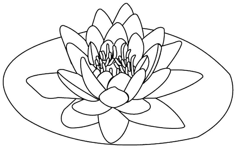 950x600 Lotus Flower Coloring Pages Pics Of Lotus Flower Coloring Pages