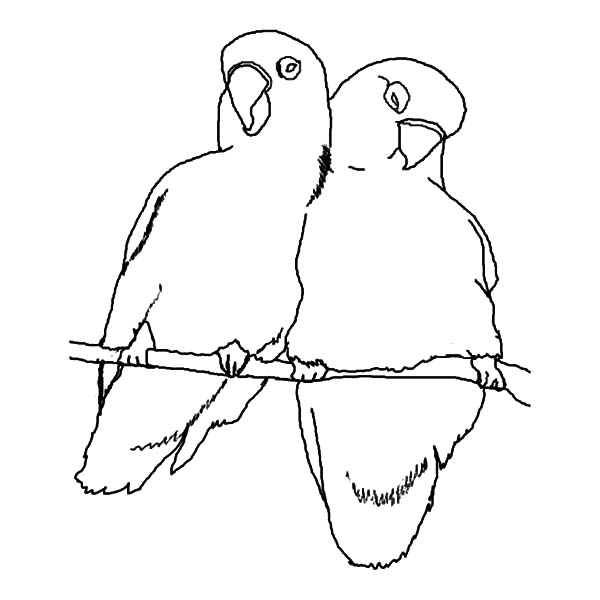 600x600 Promise Me Your Love Birds Coloring Pages Batch Coloring