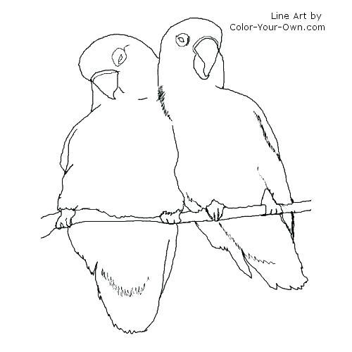 500x500 Baby Bird Coloring Page Bird Coloring Sheets Baby Bird Coloring