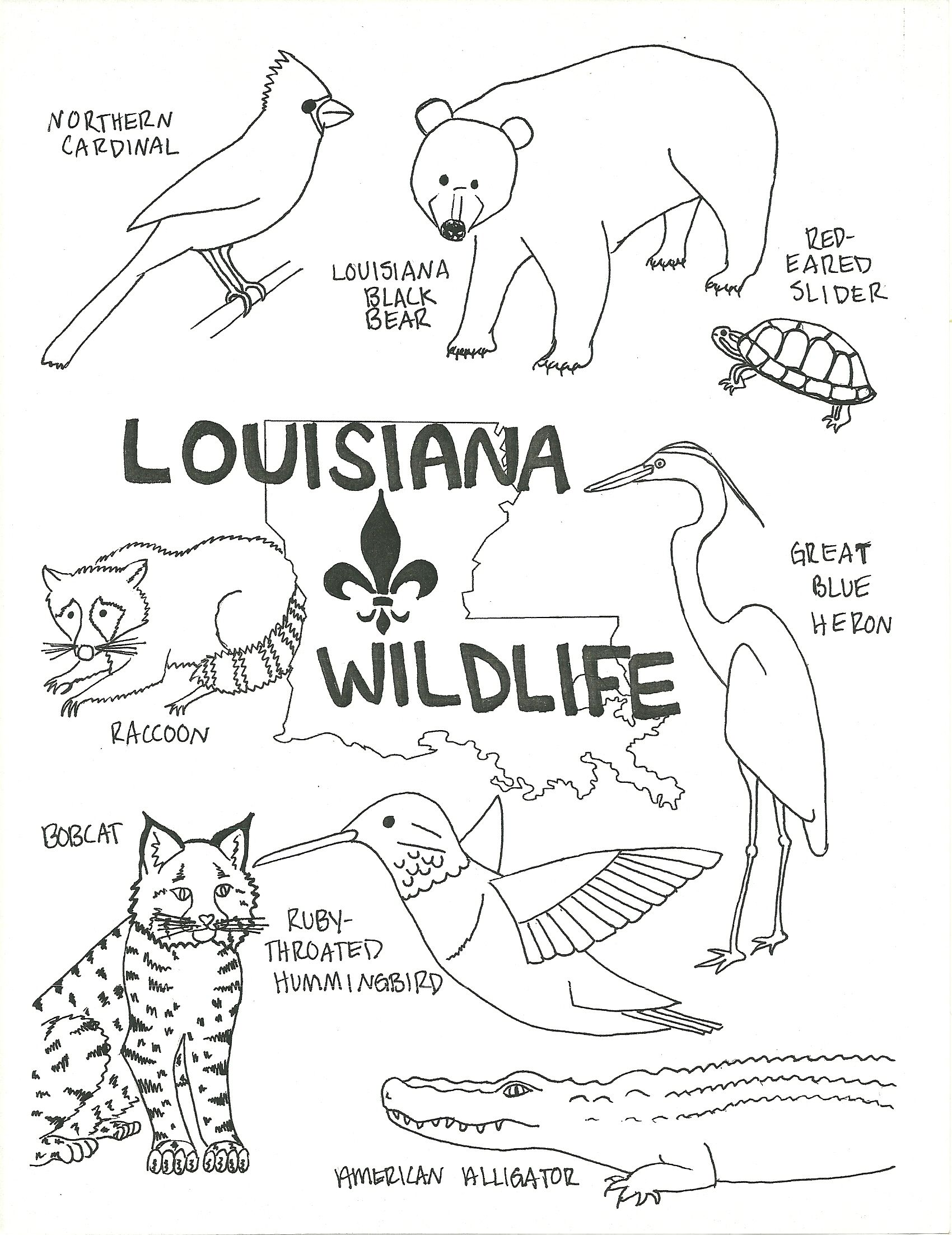 1700x2204 Louisiana Wildlife Coloring Page Wildlife, Social Studies