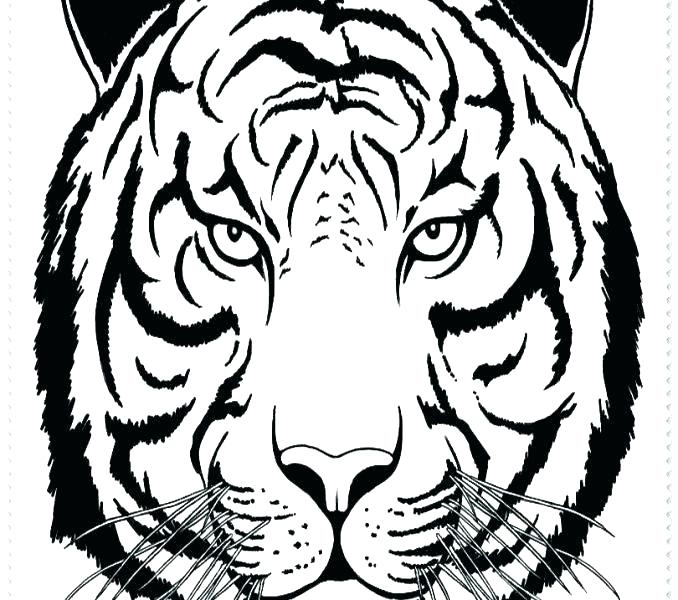 678x600 Lsu Coloring Pages Tigers Coloring Pages Copy Tiger Best Lsu