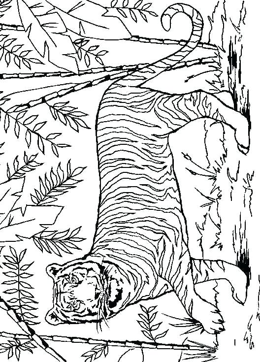 528x735 Astounding Lsu Coloring Pages Tiger Coloring Pages Lsu Coloring