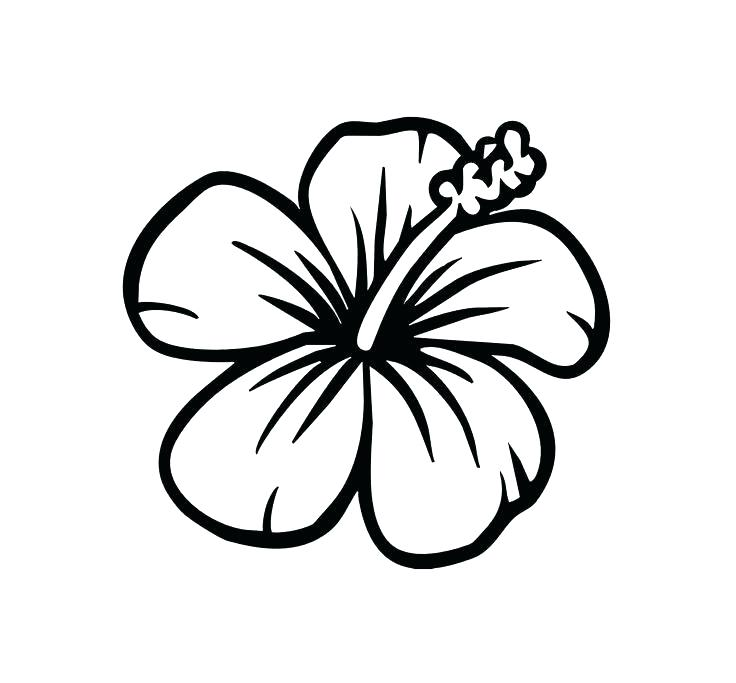 736x683 Hibiscus Coloring Pages Flowers Coloring Pages Simple Drawing How