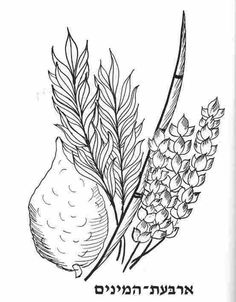 Lulav And Etrog Coloring Pages