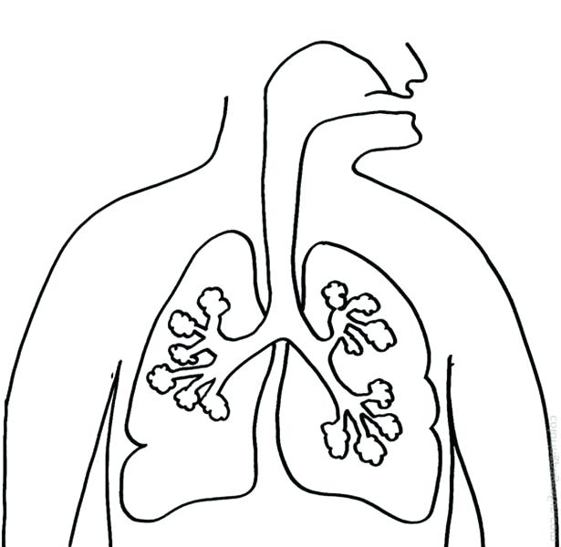 615x600 Human Coloring Pages Human Anatomy Lungs Coloring Pages Lego Human