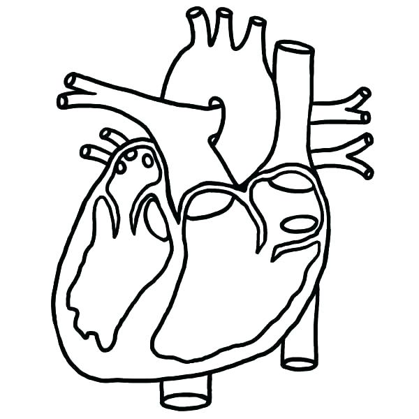 600x600 Human Coloring Pages Human Body Anatomy Coloring Pages Human