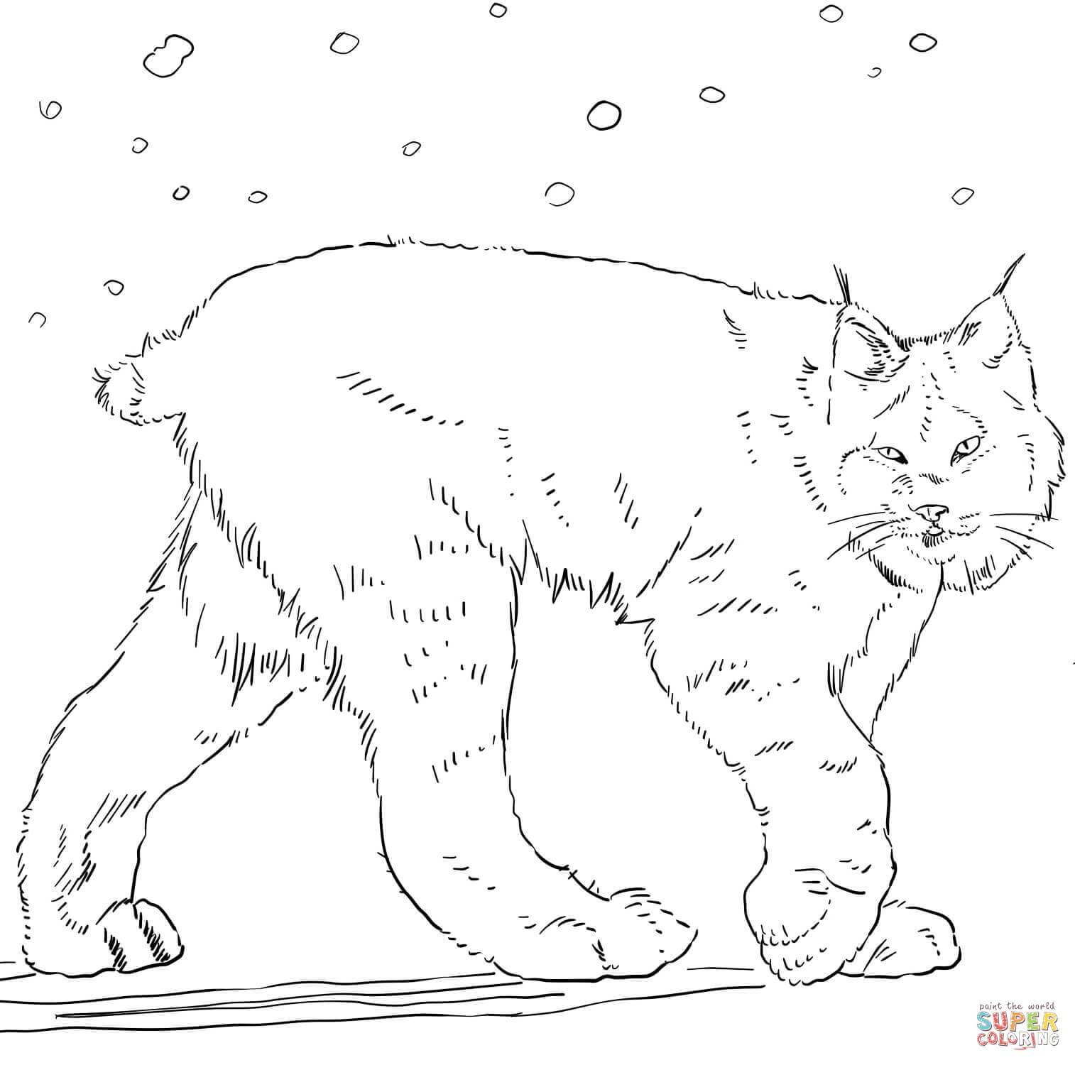 1514x1500 Marvelous Canadian Lynx Coloring Page Printable Pics For Cat