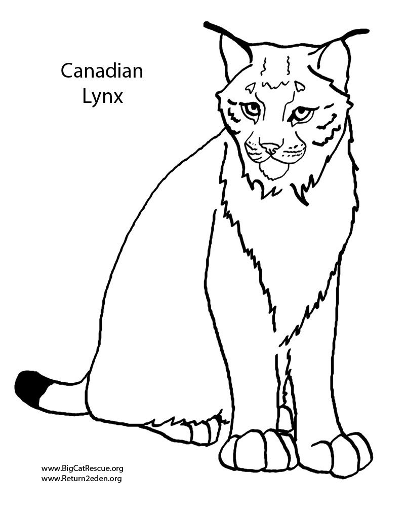 800x1000 Unbelievable Animal Jam Coloring Pages Lynx Best About Pict