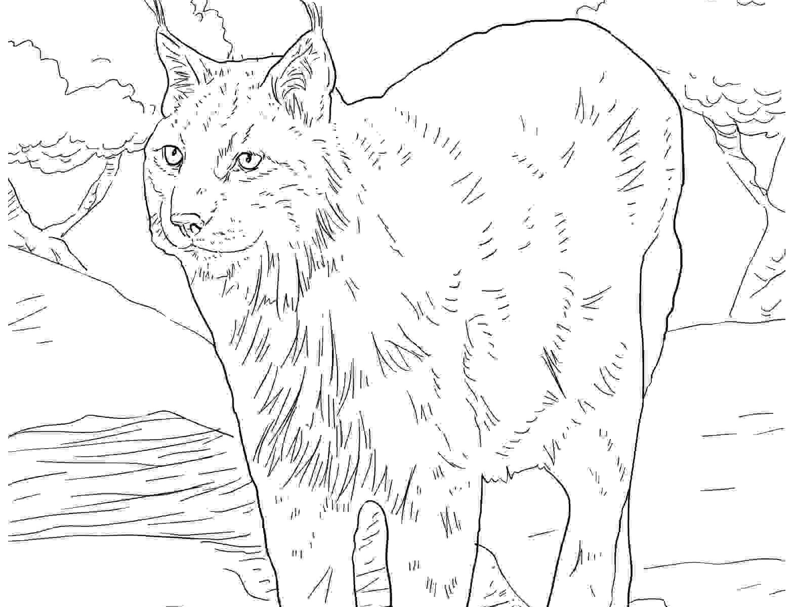 1567x1200 Drawing Lynx Coloring Pages Minnesota Colouring Pages To Colour