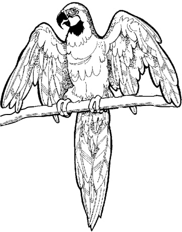 361x460 Macaw Coloring Page Mural Craft