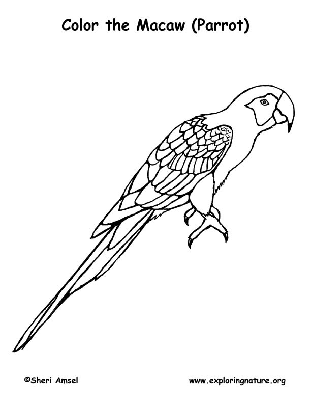 Macaw Coloring Page At Getdrawings Com Free For Personal Use Macaw