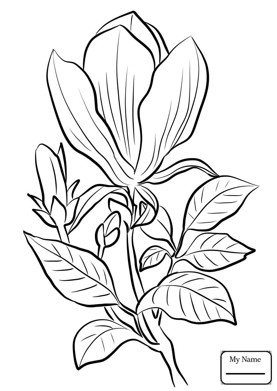 Magnolia Coloring Page