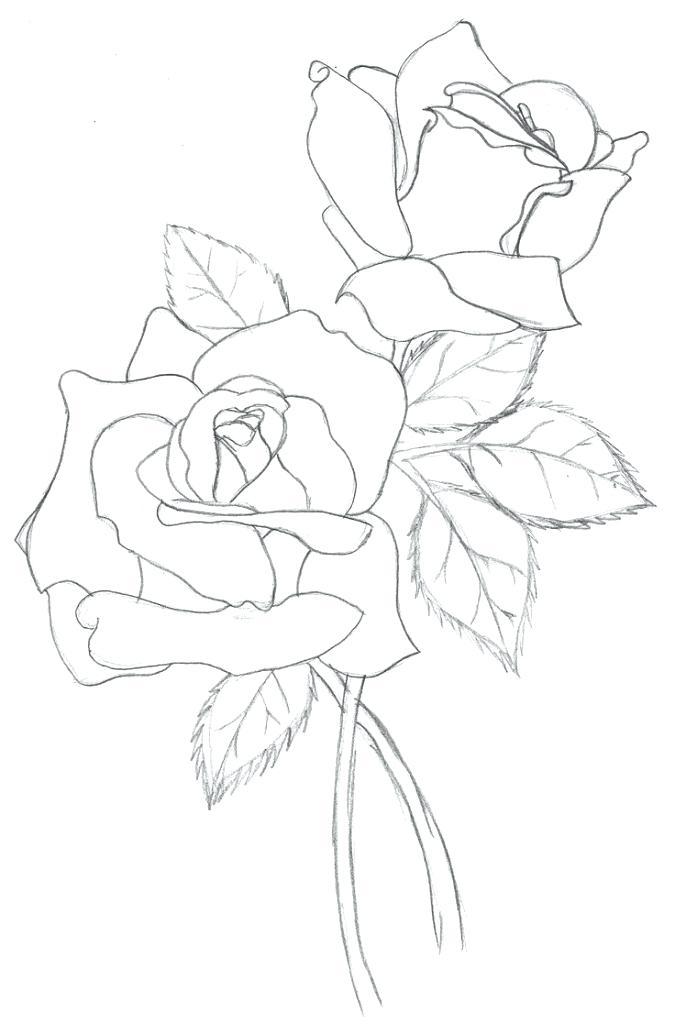 675x1024 Place Magnolia Magnolia Drawings And Magnolia Free Printable Place