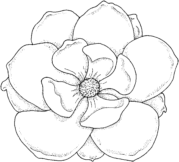 677x615 Flowers Coloring Pages Color Printing Flower Coloring Pages