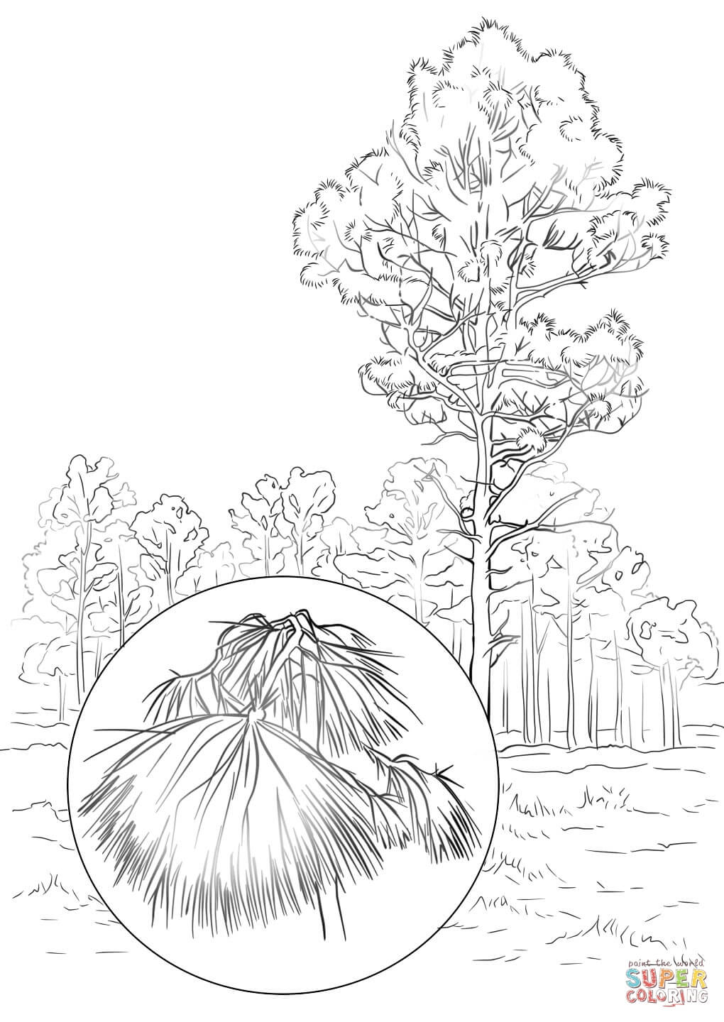 1020x1440 Willpower White Pine Tree Coloring Page Maine State Free Printable