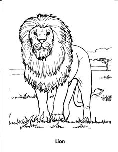 Male Lion Coloring Pages At Getdrawings Com Free For