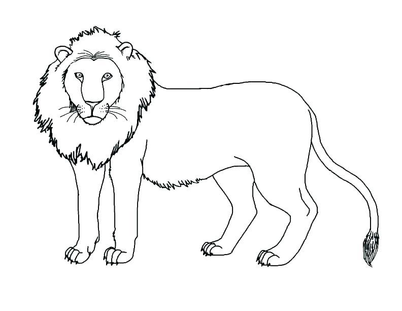 792x612 Lion Coloring Pages Cartoon Male Lion Coloring Page Lion Coloring