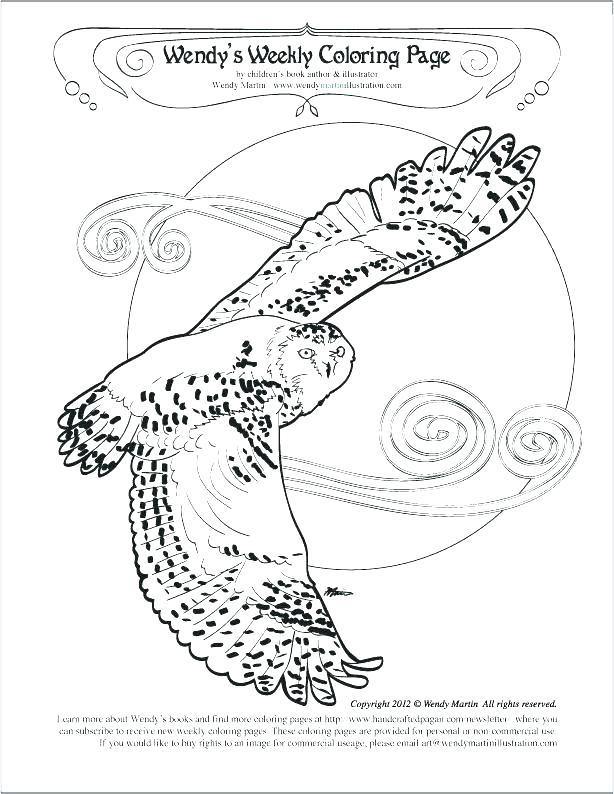 614x794 Snowy Owl Coloring Page Snowy Owl Coloring Page Snowy Owl Coloring