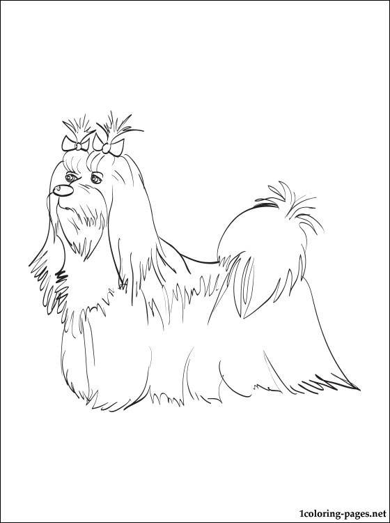 560x750 Maltese Coloring Page Coloring Pages