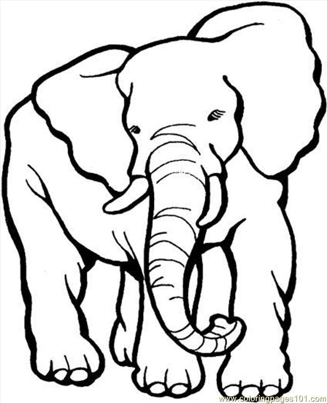 650x802 Elephant Coloring Page Coloring Page
