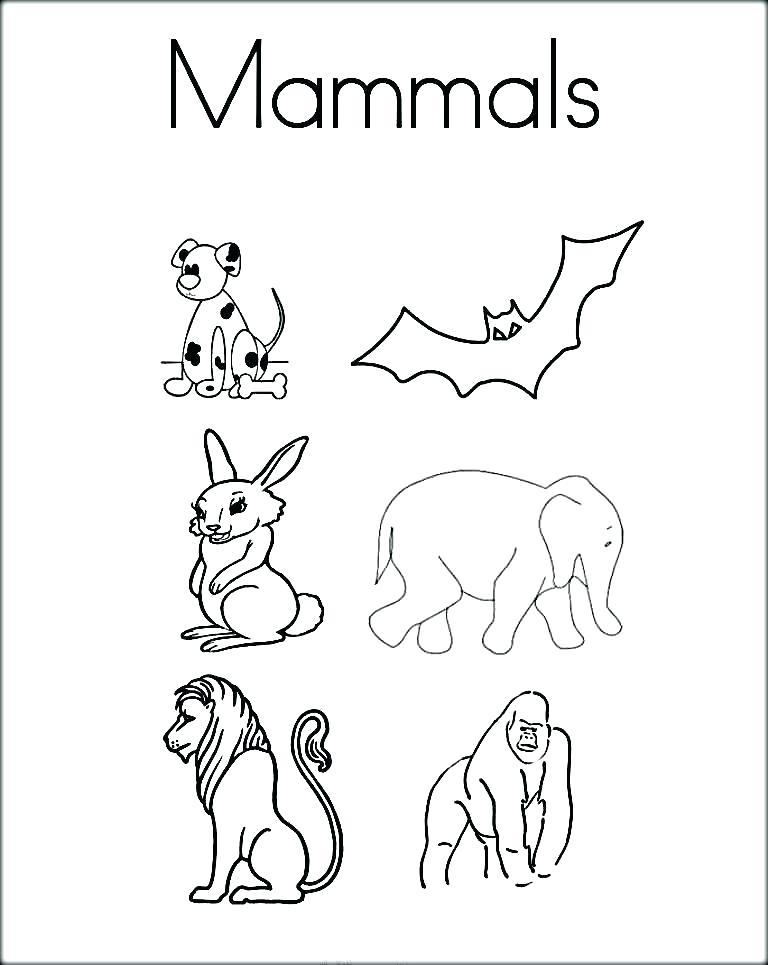 768x965 Mammal Coloring Pages Animals Coloring Pages Printable Coloring
