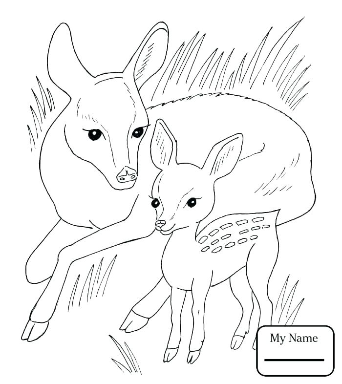 700x786 Mammal Coloring Pages Fawn Coloring Pages Roe Mammals Coloring