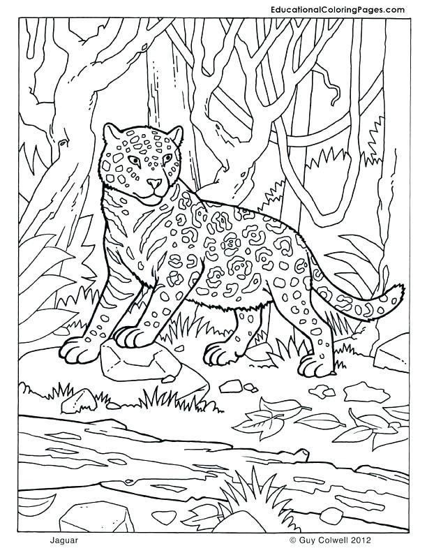 612x792 Mammal Coloring Pages Mammal Coloring Pages Mammals Book Four