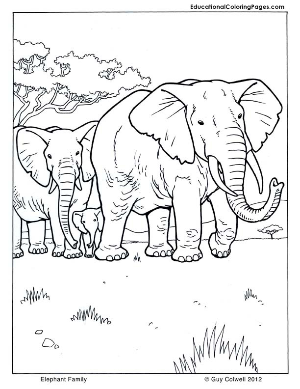 612x792 Mammals Coloring