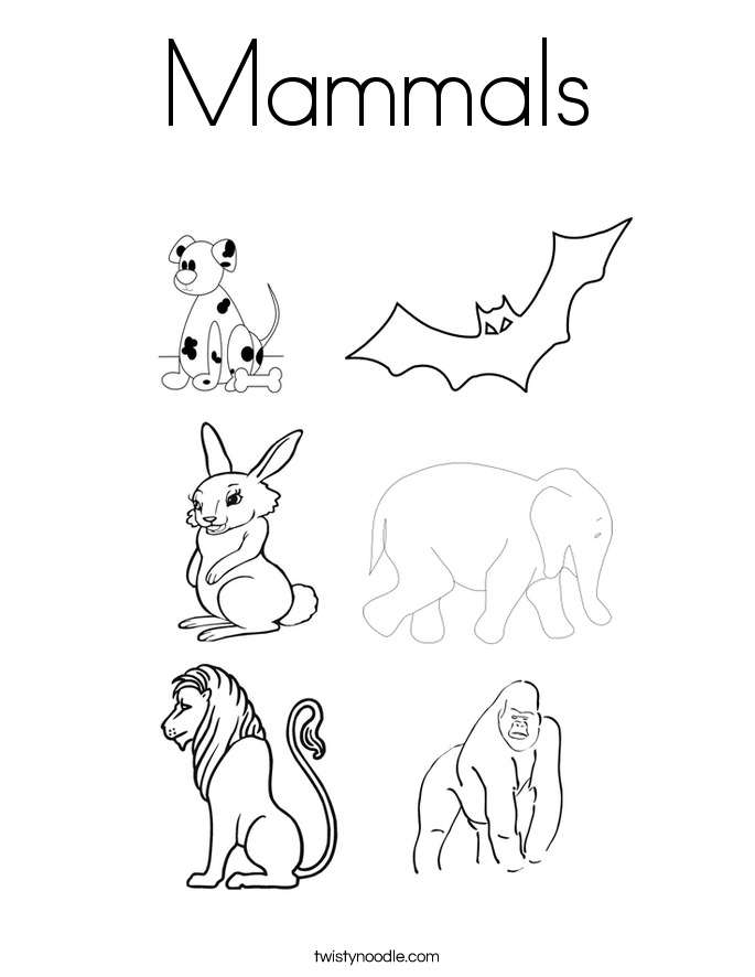 685x886 Mammals Coloring Page