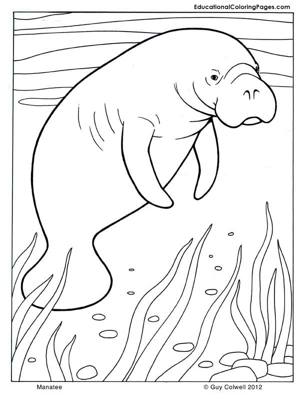 612x792 Manatee Coloring, Mammals Coloring Pages Mammals Coloring Pages