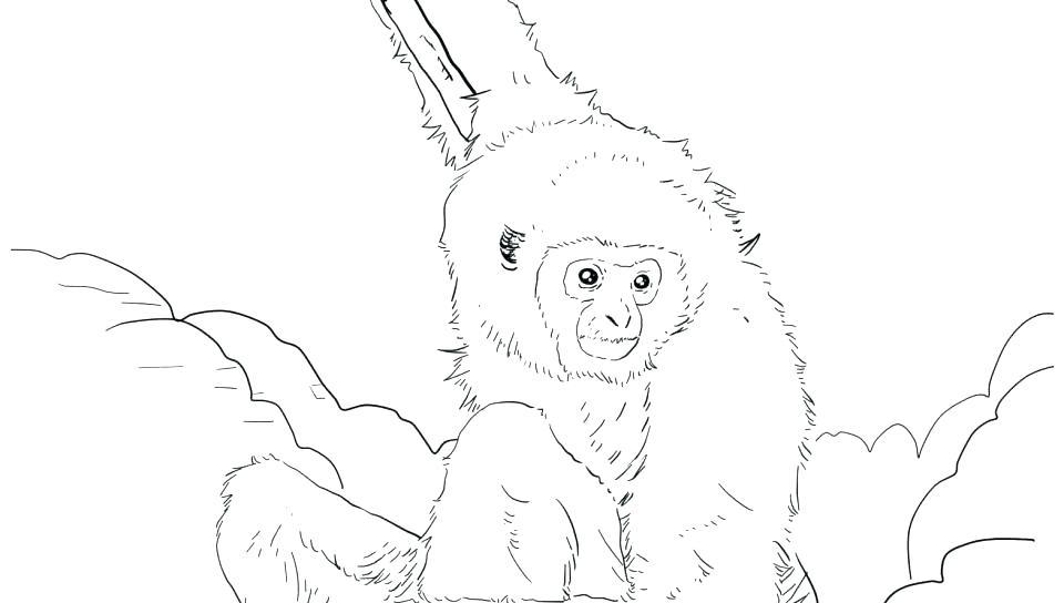 960x544 Orangutan Coloring Page Mammal Coloring Pages Baby Orangutan